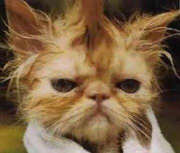 I'm cranky... damn cranky!