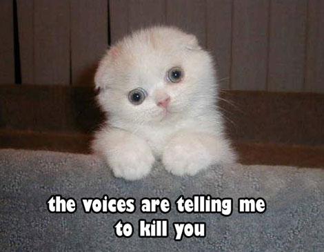 voices470.jpg