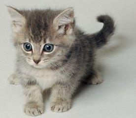 A kitten… isn't it cute?