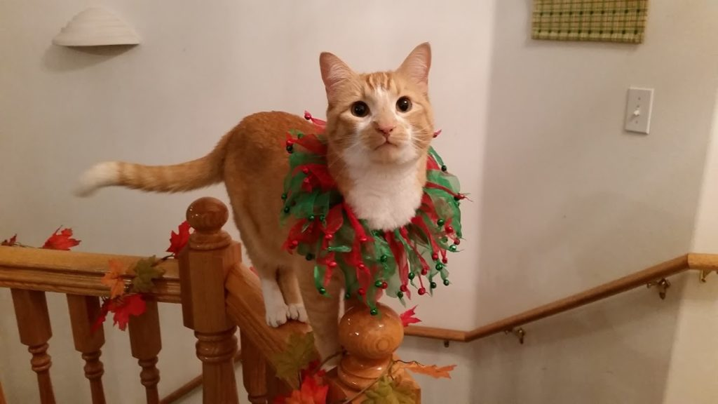 Our cat, Artemus, on the bannister with the bells that jingle
